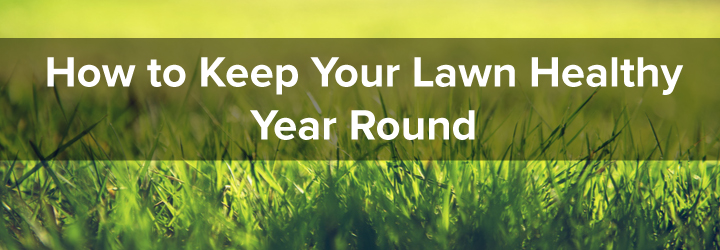 Tips for keeping a lawn healthy all year